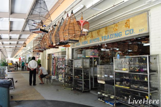 Telok Blangah bird shop
