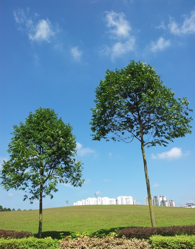 Trees pic